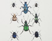 Insect collection, beetles ink illustration OOAK