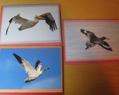 Shore bird trio: set of note cards with 4 x 6 prints, charity donation