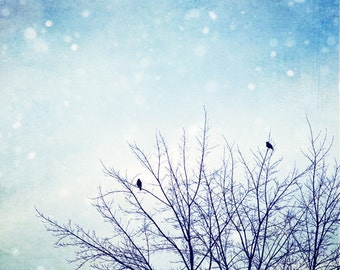 "Blue Winter Photography - birds tree christmas holiday decor light blue snow wall art pale white nature photo photograph, ""First SnowFall"""