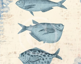 Shell Art Collage Print - 8 x 10 - Fish collage blue
