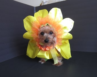 Special order custom made daffodil Flower pets costume