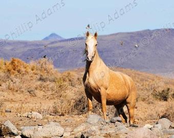 "Golden Palomino - Mustang Mare - 8.5"" x 11"""
