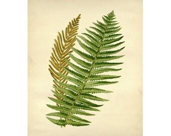 Vintage Botanical Floral Leaf/Greens Series Plate 8 Digital Download: 8x10, specimens, vntage-look, printing and framing, decoupage