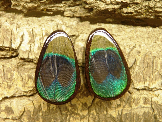 "3/4"" Real Peacock Feather on Areng Wood Teardrop Plugs"