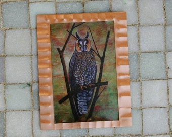 Long Earred Owl Miniature Print on Copper