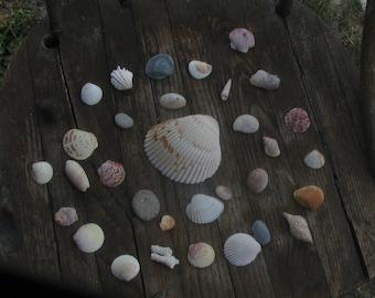 Florida Sea Shells Colorful Beach Decor Shell Collection