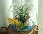 TREASURY ITEM- ( SERENITY) -  Round Glass globe with air plants ,Bleached bark,  Pearlized Sea Shell,  Yellow Coral, and Ocean Blue Sand