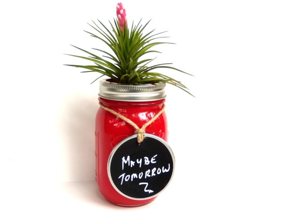 Vibrant Red Glass Jar with Air Plant and Chalkboard Tag
