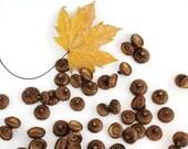 Acorn Caps Supplies. Natural Acorn Tops Supply. Fit to felt balls 18-20 mm