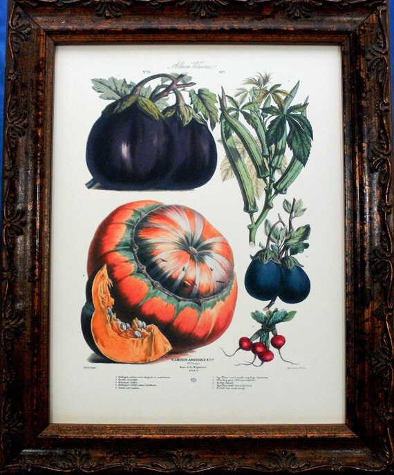 Vegetable Art No.23 from 1871 Art Print on Ivory Cotton Paper