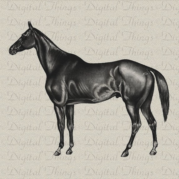 Horse Equestrian Profile Portrait Animal Art Wall Decor Art Printable Digital Download for Iron on Transfer Tea Towel Fabric Pillows DT285