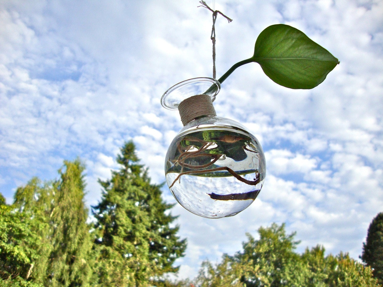 Little Hanging Glass Vase Without Plant / Modern by eGardenStudio