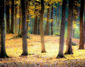 Fall Autumn Trees Woodlands Golden Sun Butter Yellow Red October November Surreal Dreamy Nature Photography, Fine Art Print