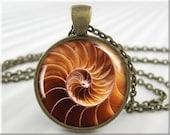 Seashell Pendant Charm Ocean Seashore Jewelry Beach Picture Necklace (091RB)