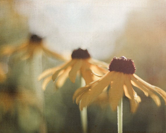 Yellow Flower Photography, Nature Photograph, Brown, Gold, Green Decor,  Rustic Summer Picture