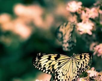 Butterfly print, pink yellow and ultramarine green, nursery decor, spring decor, garden art, for girls