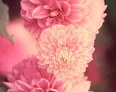 Pink Zinnias Image - Dreamy Floral Photo- gift under 50 photography home decor nature photography theartisangroup