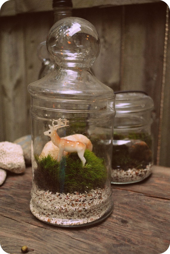 Deer Terrarium with LIve Moss