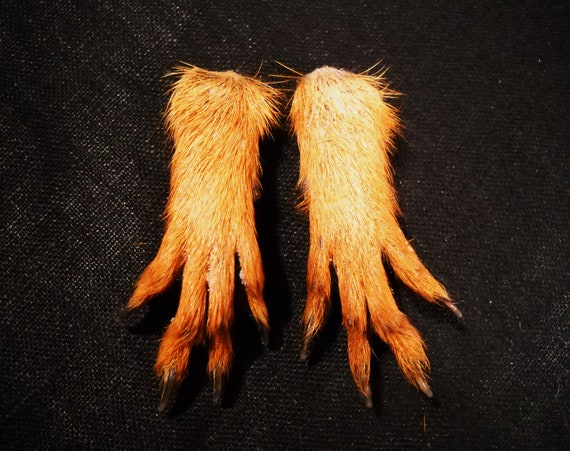 1 Pair Real Squirrel Paws Taxidermy Hands Leg Feet Fur And