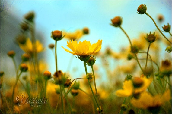 Dancing Flowers - Photography print of flowers.  Enchanted and romantic. Yellow and blue, wall art, home decor