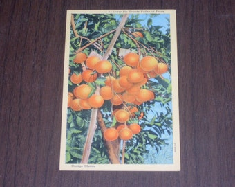 1950s Valley of Texas Post Card