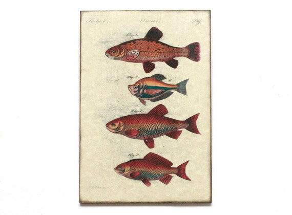 Wall Art Wood Fish : Retro wood wall art cm fish by dejavuprintstore