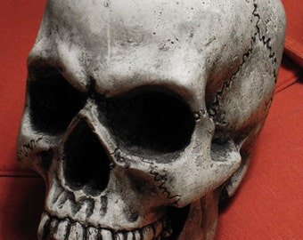 Vampire Skull Lifesize! Hand Made in the USA, with lots of love & a little bit(e) of blood