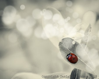 Nature Photography Ladybug Silver White and Red Macro--Fine Art Nature Photography 8x10