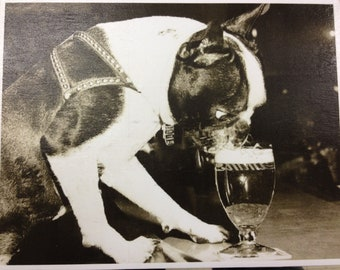 Vintage Boston Terrier Drinking Beer Print Decoupaged on Wood
