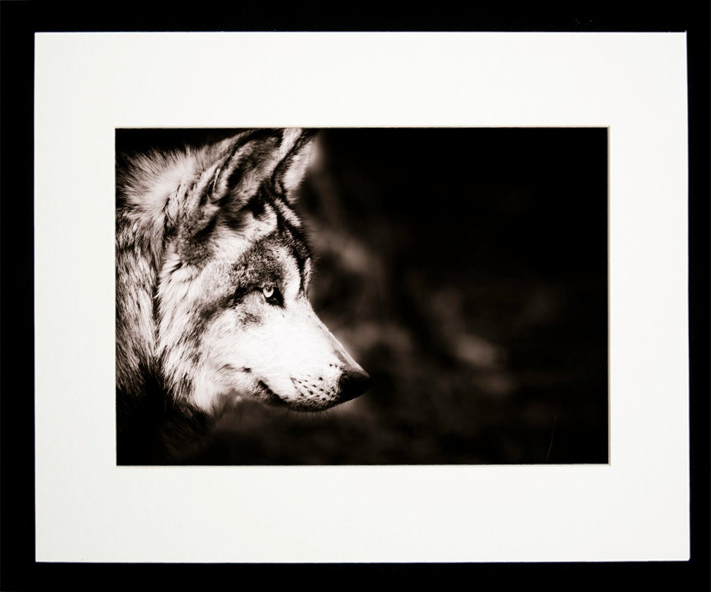 Wolf Wall Art Wildlife Home Decor Sepia Photo by BethWold