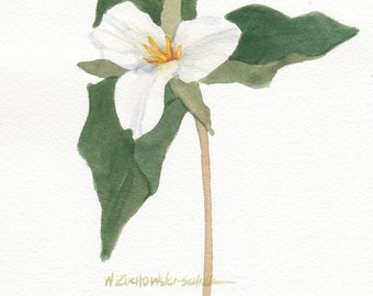 White Trillium Original Watercolor Single