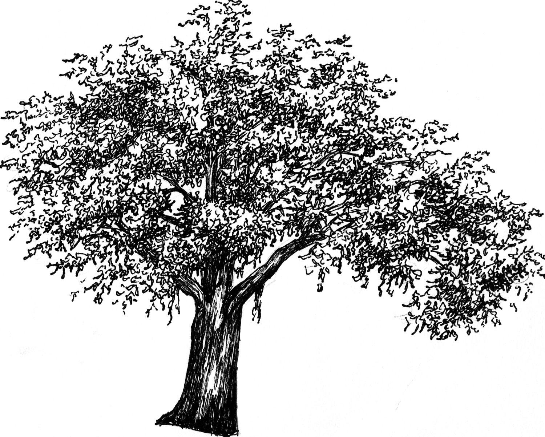 Tree sketch - Tattoo? | Entourage | Pinterest | Tree ...