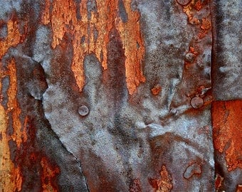 Abstract Fine Art Photography Industrial Rust Orange Red Rust, Red Head 8x12