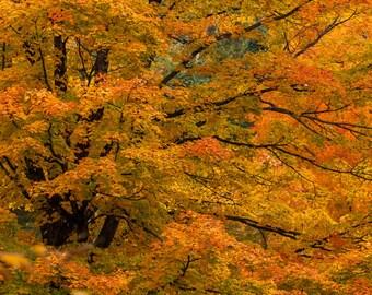 Autumn Splendor - Nature photography, landscape photography, fall, autumn photography, fine art print, leaves, trees
