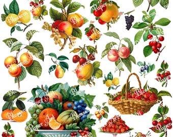 Fruits Collage Sheet - Vintage Digital Scrapbook - Scrapbooking Paper - Download Images - Printables - Clipart - 1291