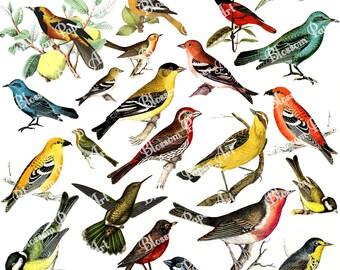 Birds Collage Sheet Digital Scrapbooking - Vintage Scrapbook - Printables - Download Image - Decoupage - Clipart - 1292