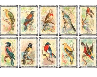 Birds Collage Sheet - Digital Scrapbook - Scrapbooking - Decoupage Download Images - Vintage - Printables - Blossom Paper Art - 1294