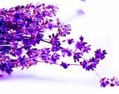 Lavender Photography, Lavender bouquet twigs, Purple Flower photography, Pink purple fuschia 8x10 or 8x12