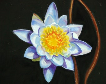 "Water Lily Bloom on Canvas Fine Art Giclee Print,  Pastel Painting By Jan Maitland, White Water Lily, 8"" X 8"" Canvas, Ready to Hang"