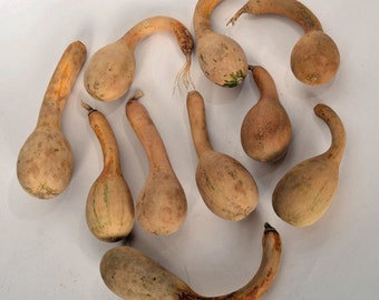 Natural Spoon Gourds, Dried gourds, Ten (10) gourds, Dipper gourds, Ready to paint gourds