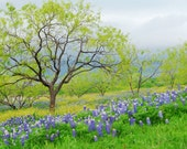 BIG PRINT SALE - 20x30 print 50% off - Bluebonnet photo - Texas nature photography