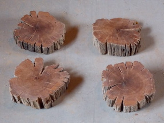 Burned & Weathered Almond Tree Trunk Rounds