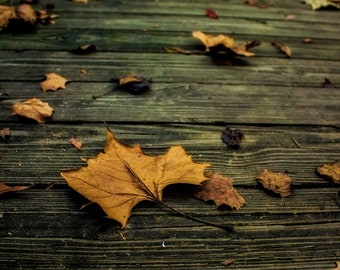 Fall Leaf Photography, Autumn Print, Nature Photo, 8x10 Art Print