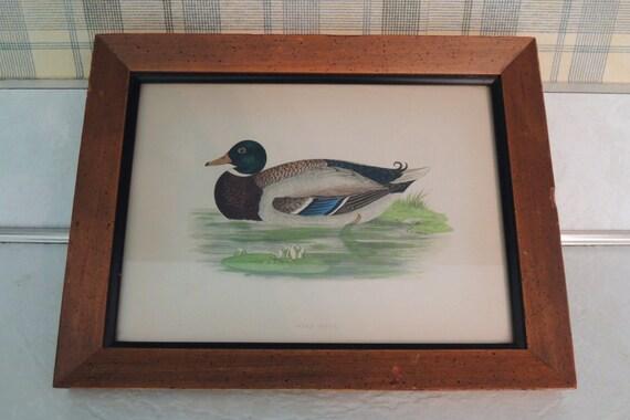 SALE - Morris Duck Lithograph, Beverly A. Morris Print, Excellent condition, Ornithology, Birds, Authenticated, Antique, Vintage