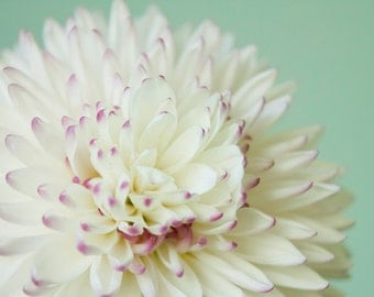 Pastel Flower Macro photograph Digital Download Photography pale green white photo print nursery wall art