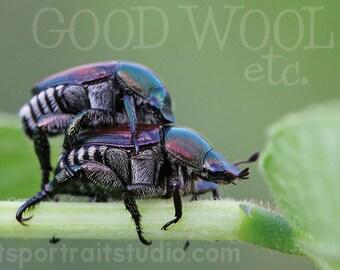 japanese beetles greeting cards - set of 10