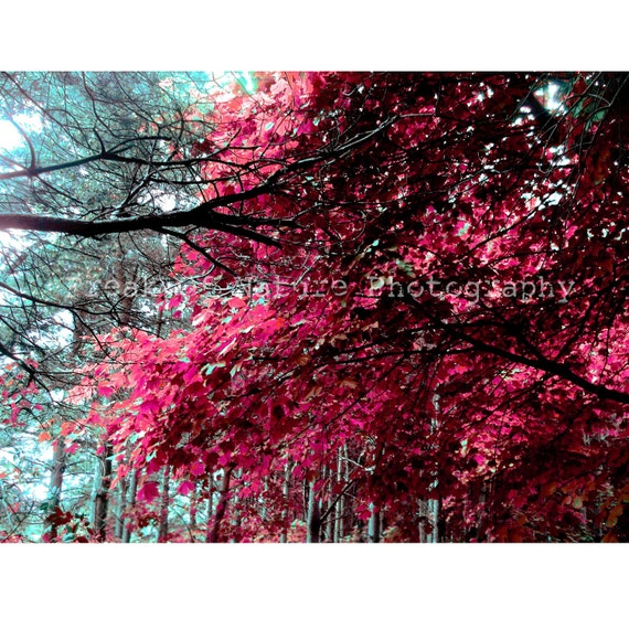 Fine Art Photography Digital Download Tree Autumn Pink Surreal Foliage Woodland Forest  Printable Art Photo Photograph