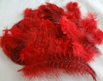 Ruby Red Spotted Guinea Hen Plumage Feather Wholesale Bulk Lot