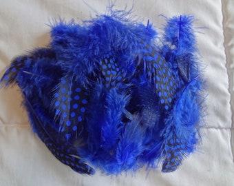 Navy Blue Spotted Guinea Hen Plumage Feather Wholesale Bulk Lot Cobalt Blue