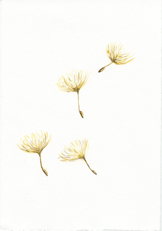 Dandelion fluff flying, dandelion watercolor sketch